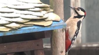 Najnowsze filmy wideo - Pomóż ptakom przetrwać zimę, telewizja nasz Racibórz