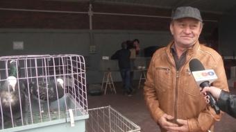 Najnowsze filmy wideo - Giełda drobnego inwentarza w Pietrowicach Wlk., telewizja nasz Racibórz