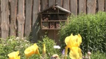 Najnowsze filmy wideo - Nowości w arboretum, telewizja nasz Racibórz