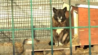 Najnowsze filmy wideo - Pies niekoniecznie pod choinkę, telewizja nasz Racibórz