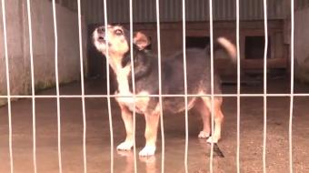 Najnowsze filmy wideo - Plac dla psów, telewizja nasz Racibórz