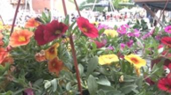 Najnowsze filmy wideo - W sobotę jarmark kwiatów, telewizja nasz Racibórz