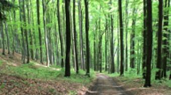 Najnowsze filmy wideo - Ekologia I/2021, telewizja nasz Racibórz
