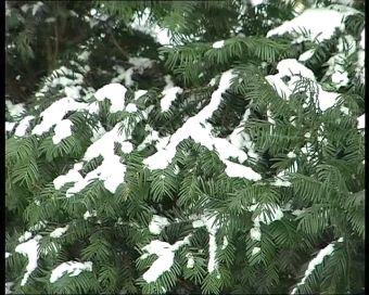 Najnowsze filmy wideo - Zima nie chce nas opuścić, telewizja nasz Racibórz